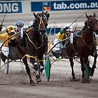 """""""The Home Stretch"""" - Geelong Trots by Sophie Lapsley"""