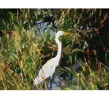 Egret in Reeds Photographic Print