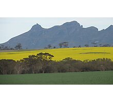 Canola in flower Photographic Print