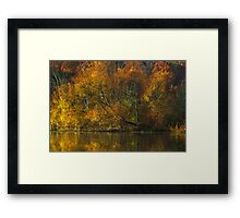 Lakeside Willow Framed Print
