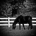 Horse in Field by Theodore Black