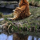 Reflecting Stripes by Alyce Taylor