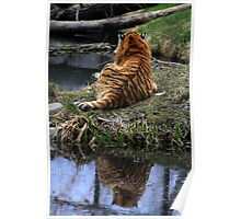 Reflecting Stripes Poster