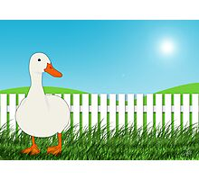 The Waiting Duck Photographic Print