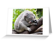 How much can a koala bear ???   Greeting Card