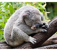 How much can a koala bear ???   Photographic Print