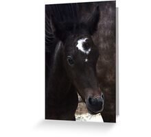 Connemara Pony Foal with amazing markings Greeting Card