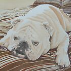 Moose the British Bulldog by FranEvans