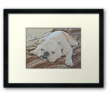 Moose the British Bulldog Framed Print