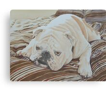 Moose the British Bulldog Canvas Print