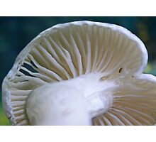 White Wax Cap Photographic Print