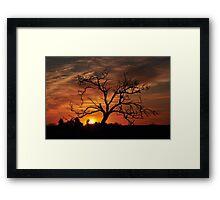 Meditation Tree in Flaming Sunrise Framed Print