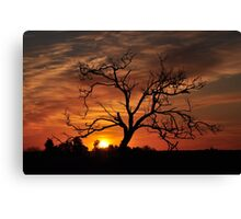Meditation Tree in Flaming Sunrise Canvas Print