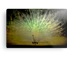 White Peacock manipulated Metal Print