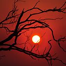 13th of May 2011  Fiery Sunset by Coralie Plozza