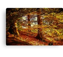 Autumn's Golden Glow. Canvas Print