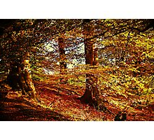 Autumn's Golden Glow. Photographic Print
