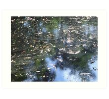 Leaves on the water - James Gray Preserve Art Print
