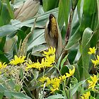 Country Corn on the Cob and Wildflowers by Barberelli