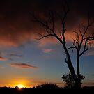 For Marijana ~ Rainbow Farm Western Australia by Coralie Plozza