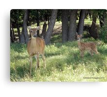 Greetings from Mother and Baby Deer ! Canvas Print