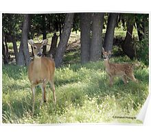Greetings from Mother and Baby Deer ! Poster