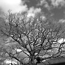 Moody Tree by rhian mountjoy