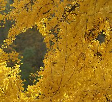 leaves gold  by Fran E.