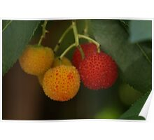 strawberry tree Poster