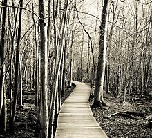 The path lies before me by Mike  Wood