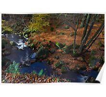 Autumn Colours, Padley Gorge. Poster