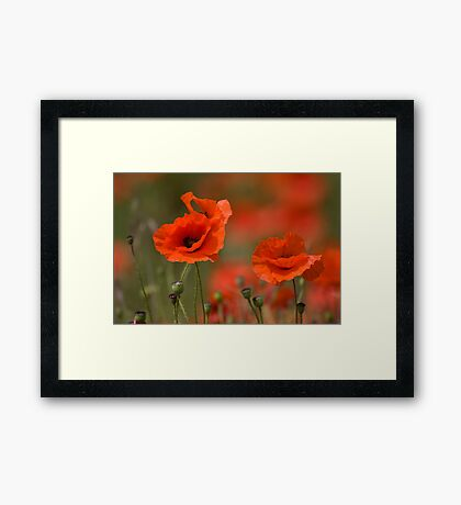 Poppies in the wind... Framed Print