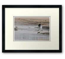 Yellowstone Grizzly - Wyoming USA Framed Print
