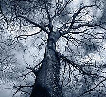 Deep In The Woods .. . . by rhian mountjoy
