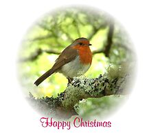 Robin Red Breast for Christmas by dizzyg