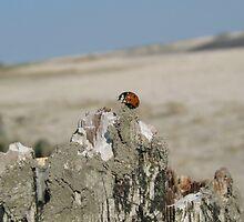 Ladybug - Moddergat Friesland by MonavdSteeg