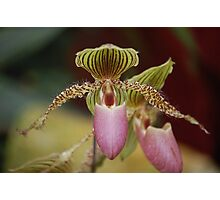 Furry Orchid Photographic Print