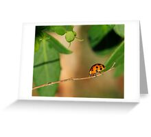 Meandering Along Greeting Card