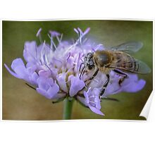 Bee Poster
