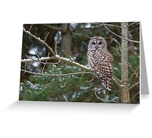 Barred Owl - Ontario Canada Greeting Card