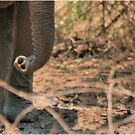SERIES: UP-CLOSE & PERSONAL, WITH THE ELEPHANT 2 by Magriet Meintjes