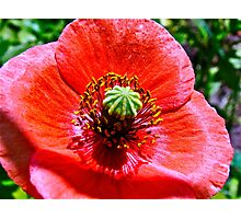 Lest we forget ...... Photographic Print
