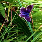butterfly. by bethaan