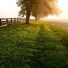 Morning Fog 2 by Leon Heyns