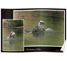 Kookaburra Dive Poster
