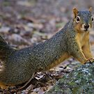 A Squirrel on a Mission by Alison M