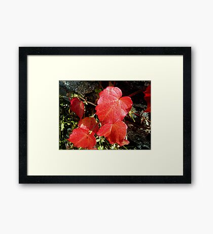 Bright! Framed Print