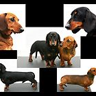 Dachshund Collage by Joanne Emery
