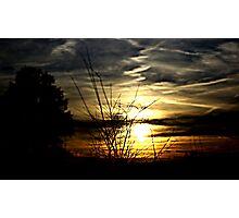 Dark trees with sun Photographic Print
