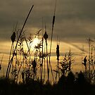 Cattail Sunset by BarbL
